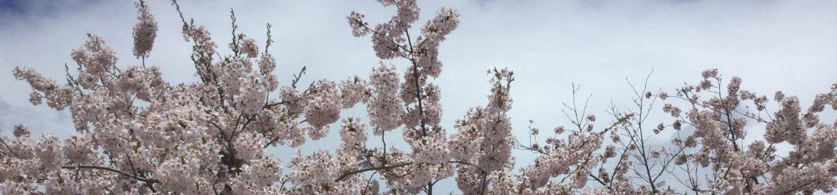 弘前の行政書士ブログ